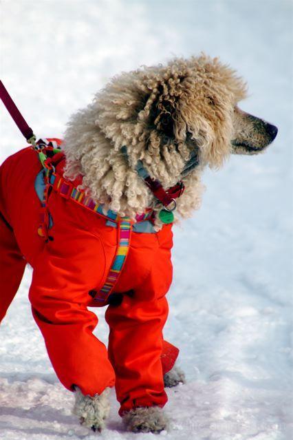 Out In My Fancy Winter Coat