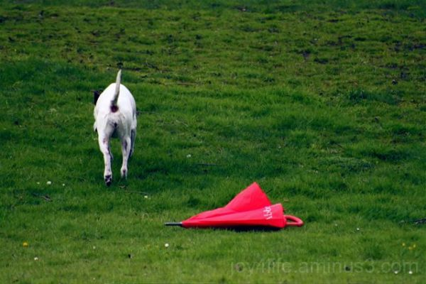 Not My Turn To Fetch......