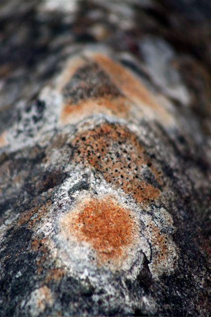 The Art Of Rocks