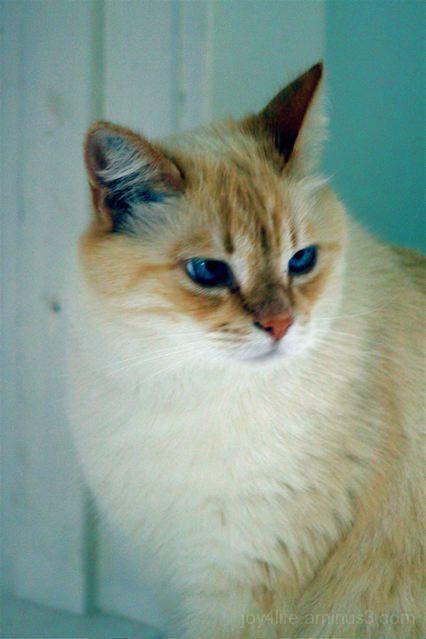 Alfie - The Little Cross-Eyed Cat