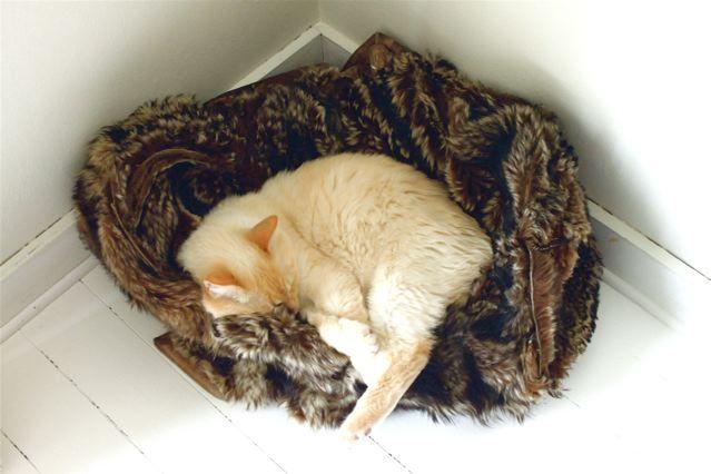 Alfie  - Safe In His Cradle....