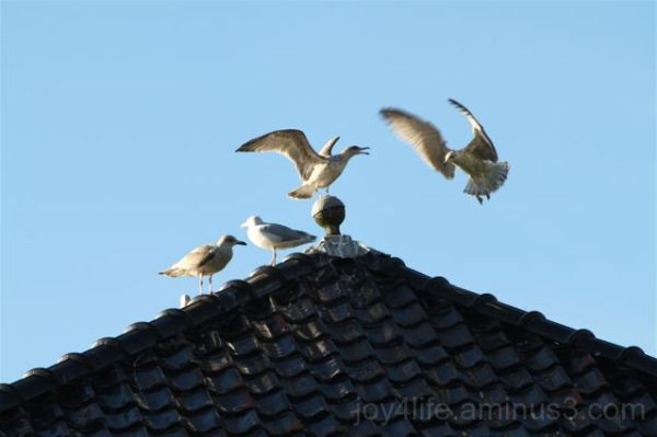Crowded Rooftop