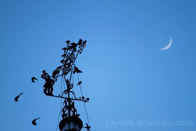 Doves & Moon