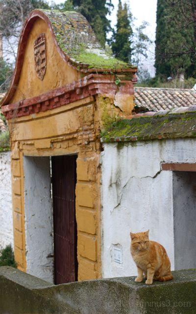 Alhambra Cat