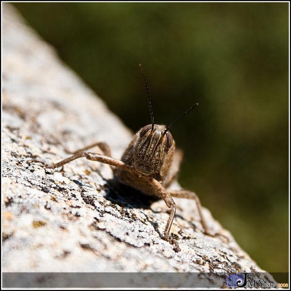Grasshopper in sun