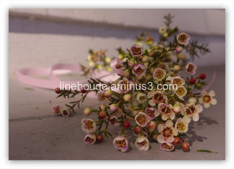des fleurs en hiver ~