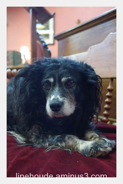 un chien zen...