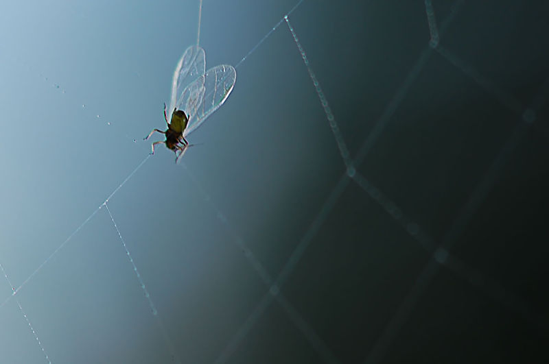fly in web