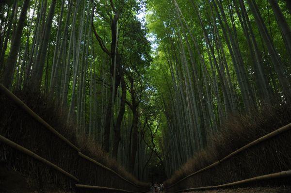 Bambo line