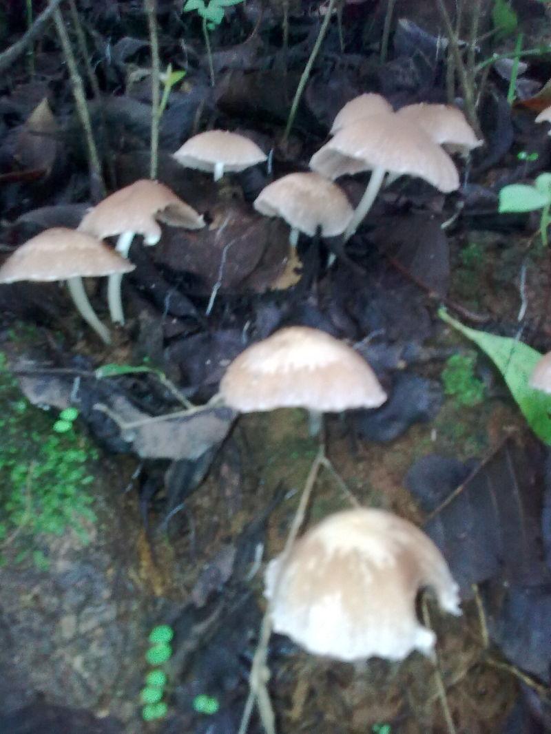 mushy mushrooms