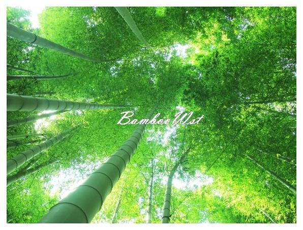 bamboo forest in Kamakura