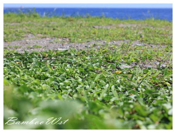 grass of the beach