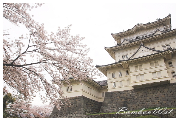 cherry blossoms with japanese castle