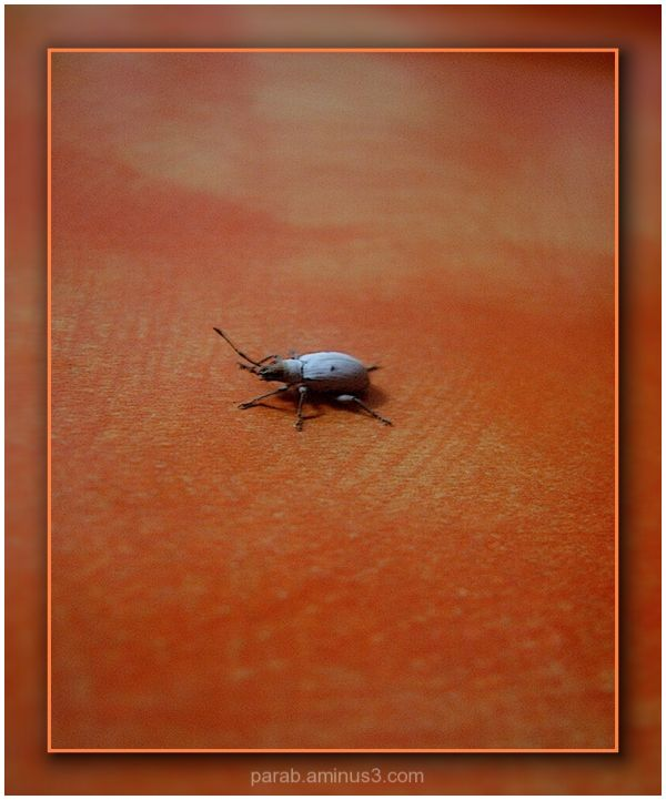 UNKNOWN INSECT.
