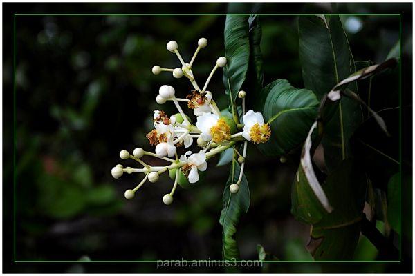 Flower.........