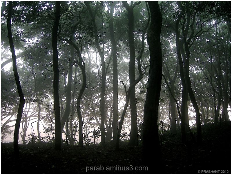 Light & Mist.
