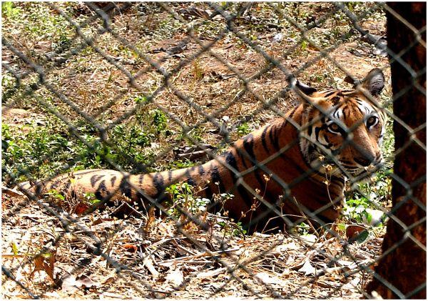 Captivity...1