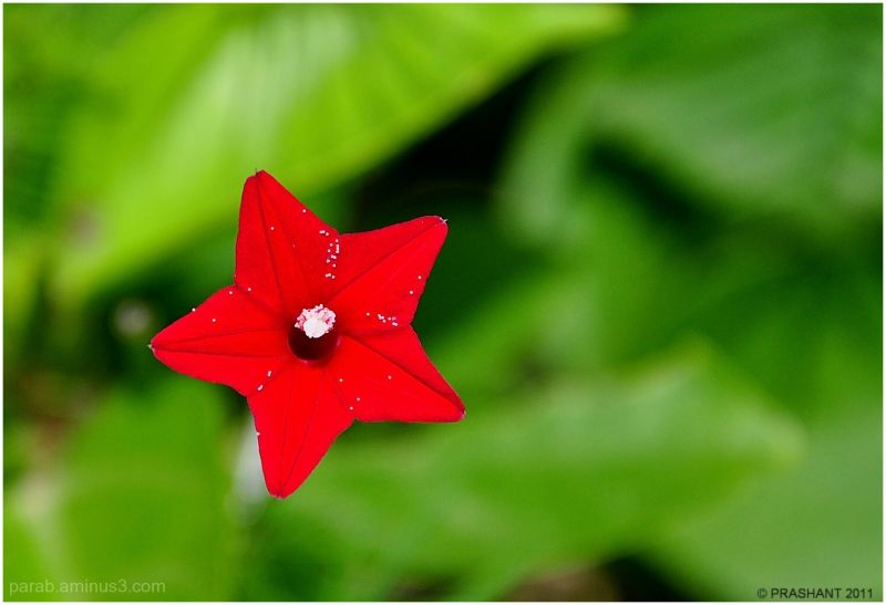 RED STAR....