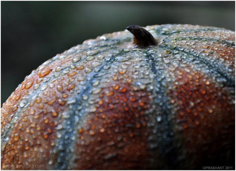 Melon...2