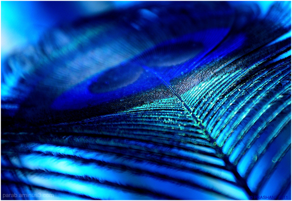 color's of  Feather...2