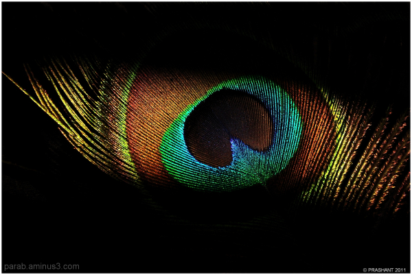 color's of  Feather...3