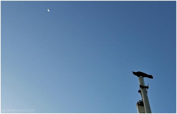 Crow & Moon.