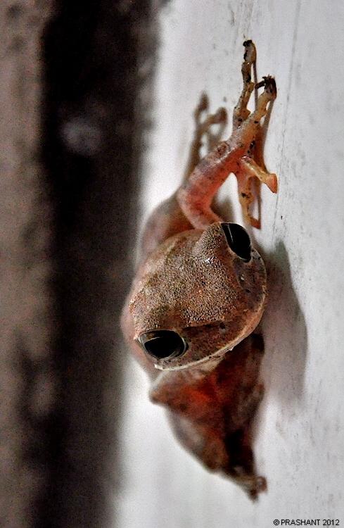 Frog on wall.