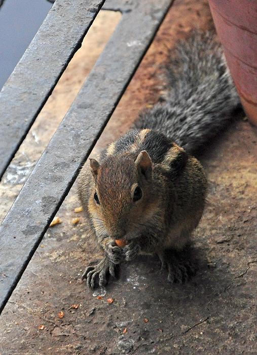 Squirrel  ^^