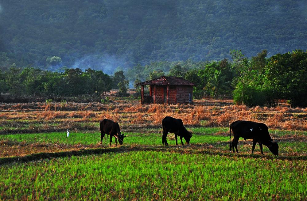 A Rural house...5