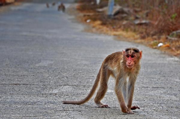 Monkey....5