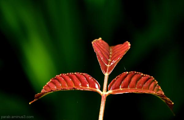 A New Leaf..