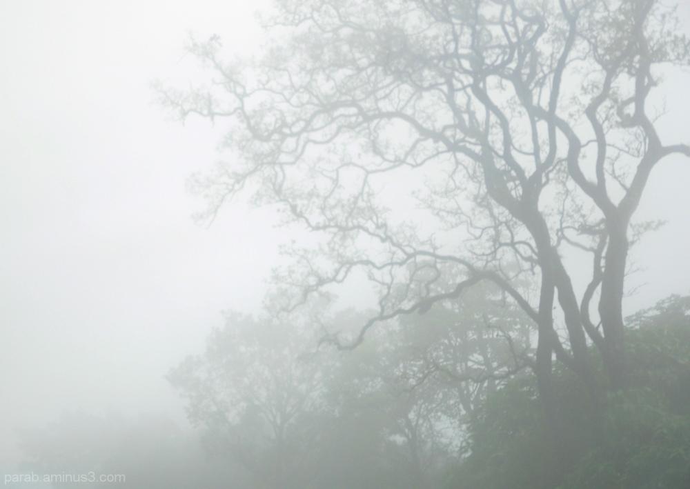 Mysterious Mist....1