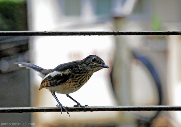 window bird....4