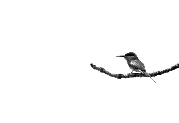 the bird....2