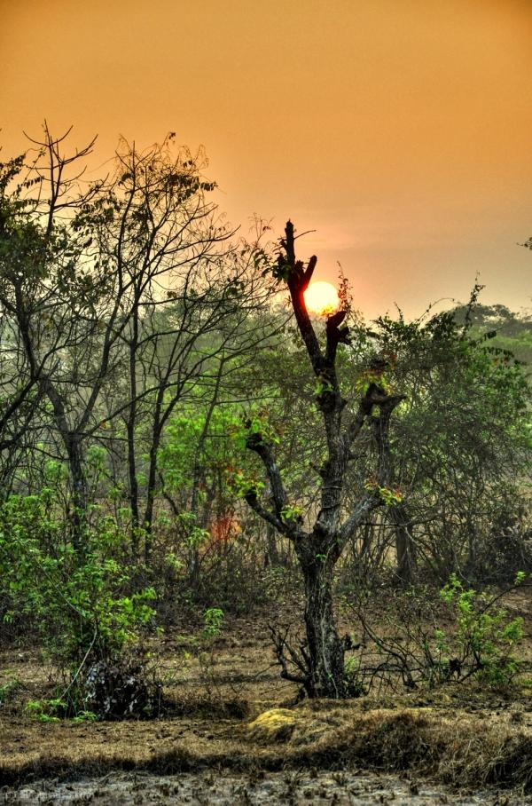 Sunrise...6