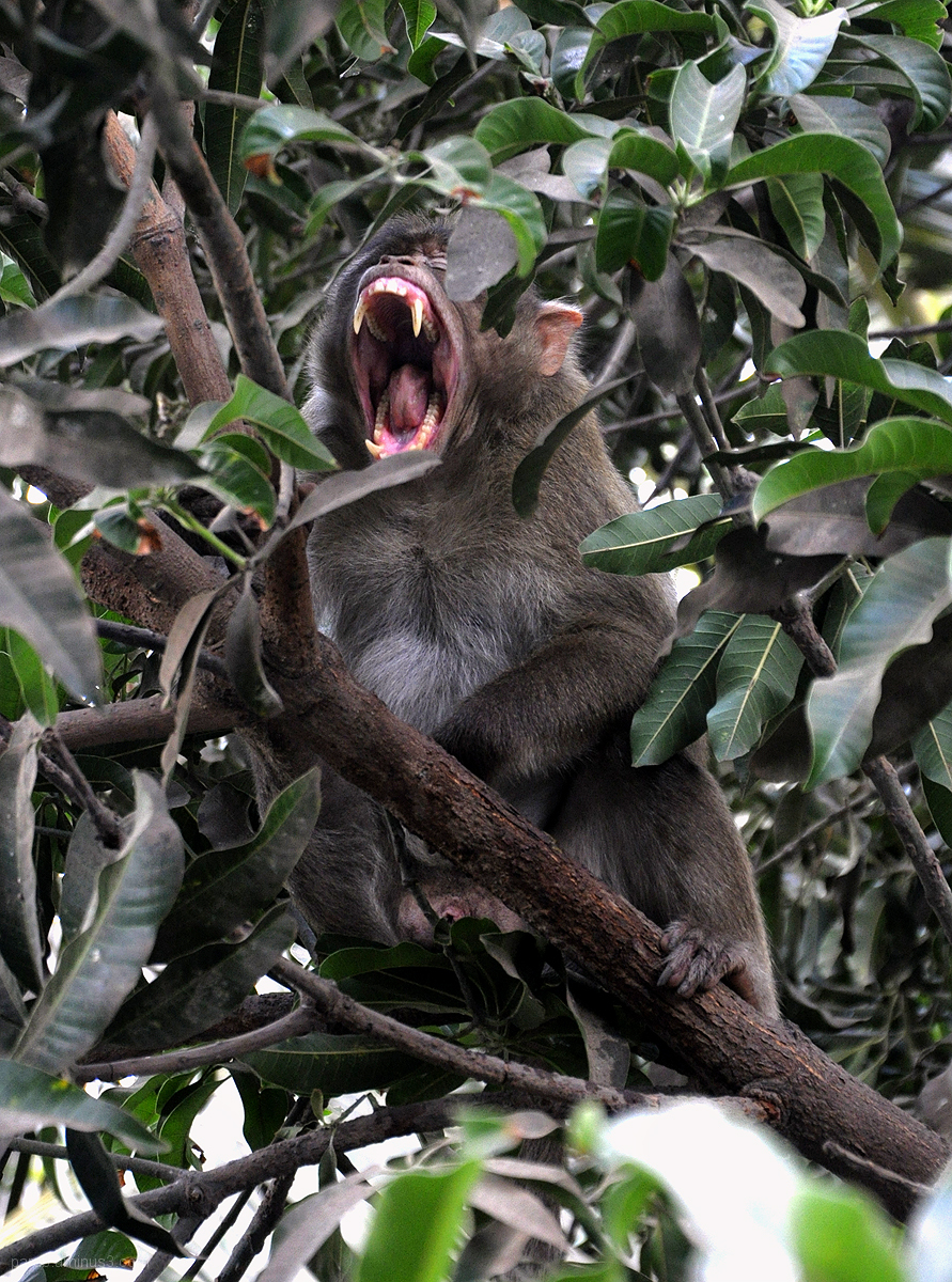 yawning !!