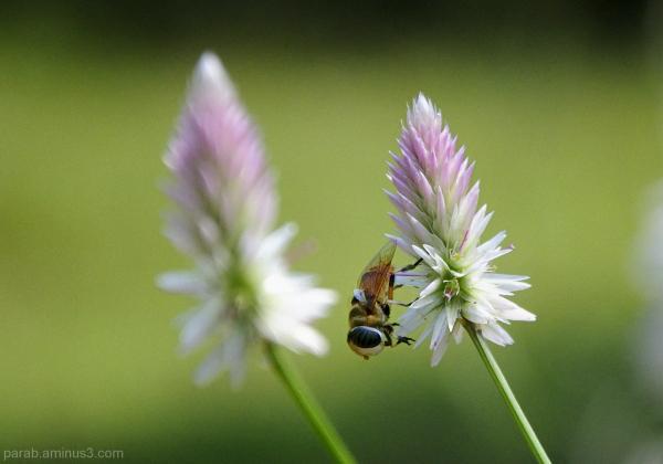Wild beauty..