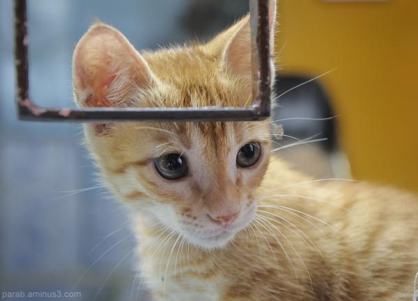 Kitten....1