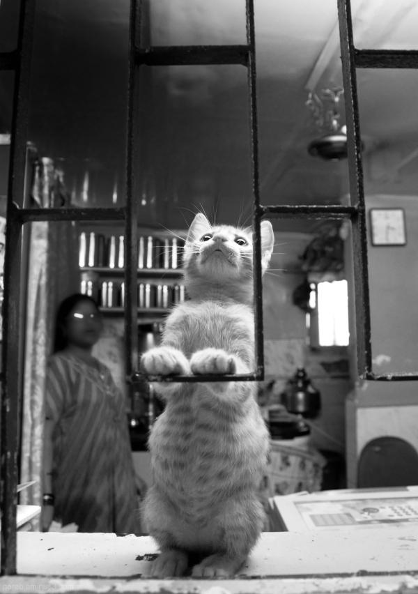 Kitten....2