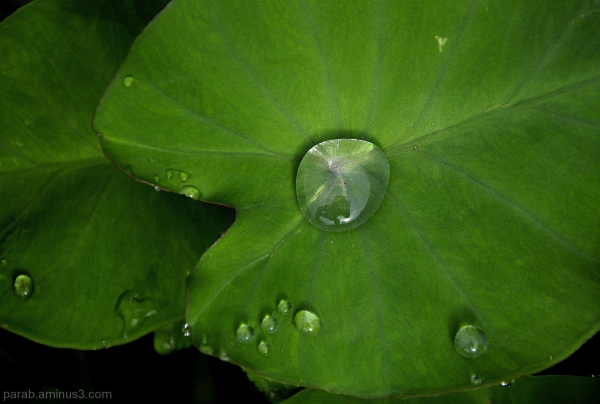 Green Pearl.