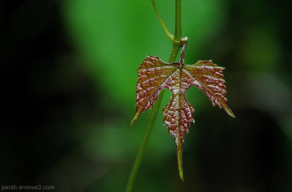 Tiny Leaf.