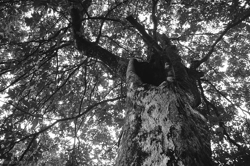 Tree....4