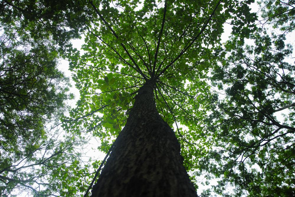 Tree....5