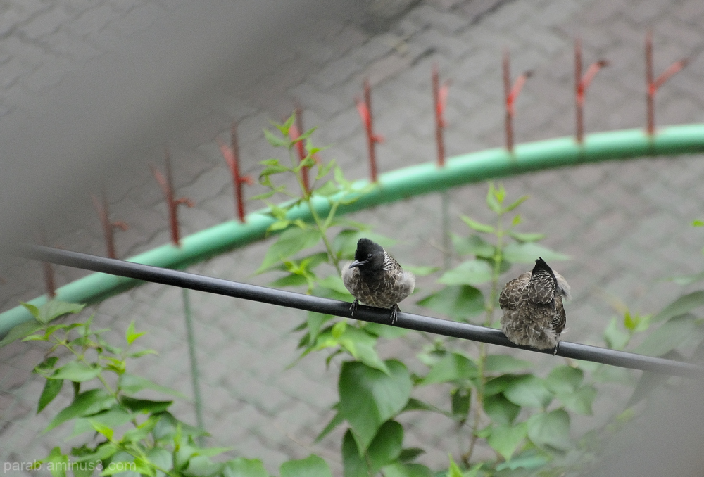 Birds on wire.