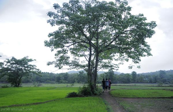 Tree....7