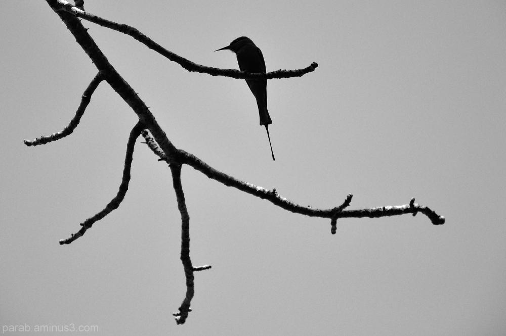 Branch..