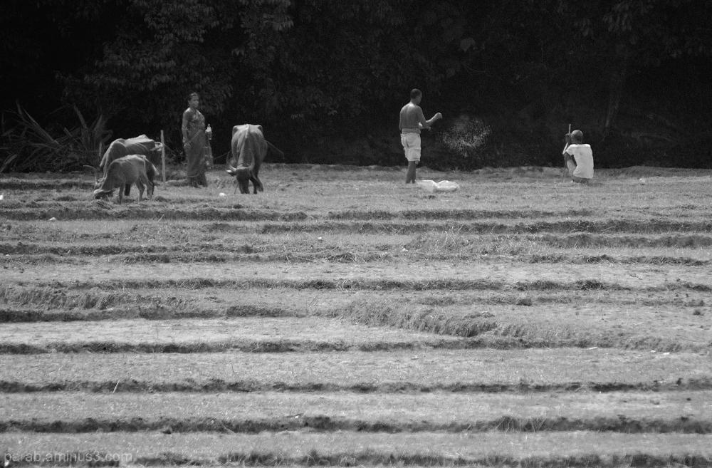 Farmer & Field