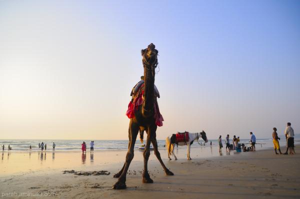 camel ride.