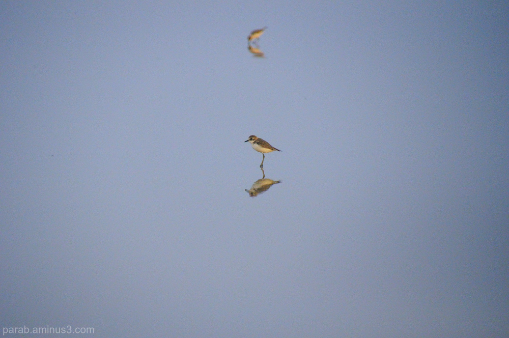 Birds..