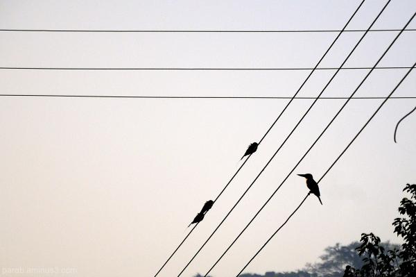 birds & wire